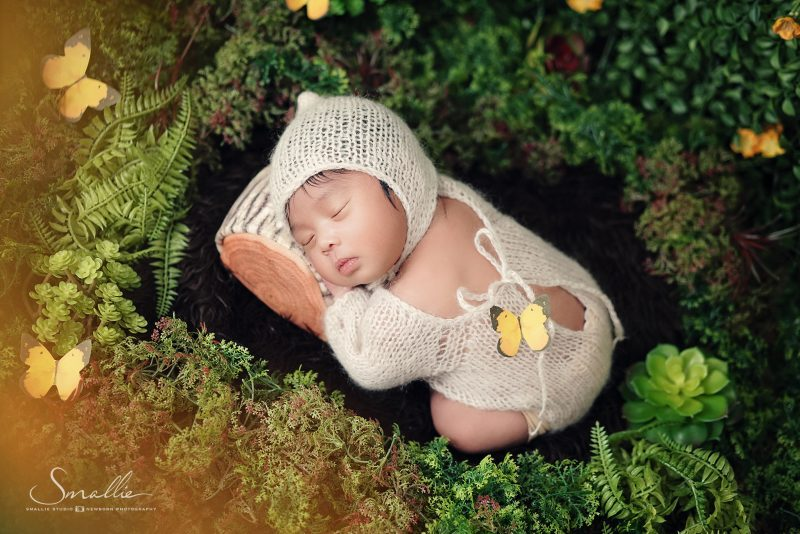 newborn forest with fog