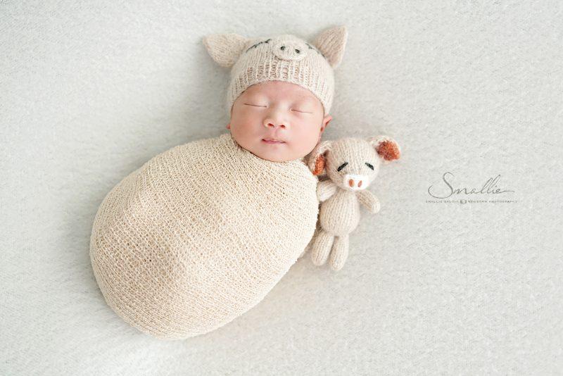 Chinese Zodiac Pig